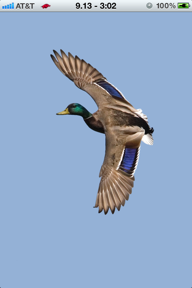 Delta Waterfowl Wallpaper Mzl.paxupqwo delta waterfowl